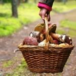 Sagra della polenta e dei frutti del sottobosco
