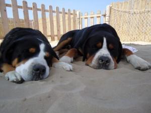 Spiagge per cani e animali in romagna spiagge animarli rimini - Bagno wanda cesenatico ...