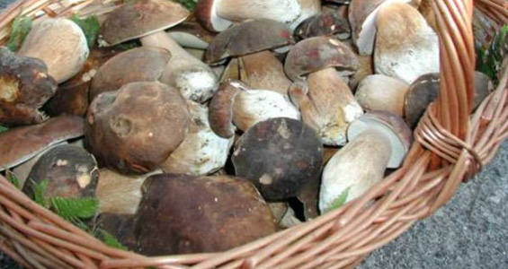 Romagna- sagre di settembre- funghi