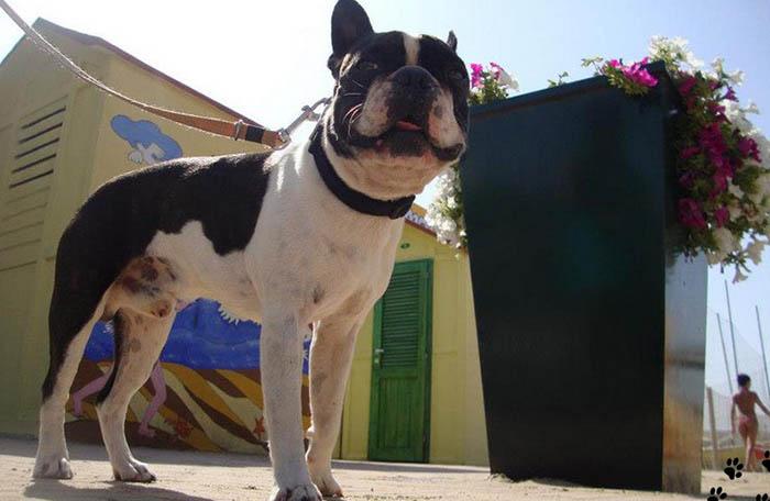 Guida alle spiagge per cani e servizi a 4 zampe: la Romagna è a misura di animali! #caninviaggio 1