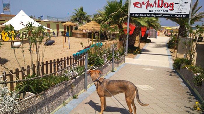 Guida alle spiagge per cani e servizi a 4 zampe: la Romagna è a misura di animali! #caninviaggio