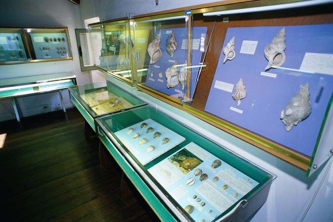 viserbella museo conchiglie