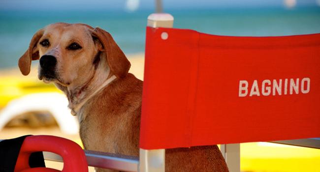 Guida alle spiagge per cani e servizi a 4 zampe: la Romagna è a misura di animali! #caninviaggio 6